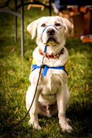 SafeHaven Paws in the Park 2014-9