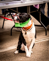 SafeHaven Paws in the Park 2014-19